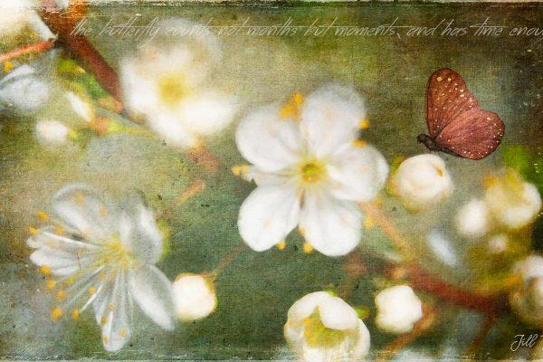 Papillon-Net